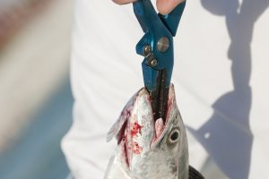 The 10 Best Saltwater Fishing Pliers
