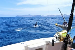 A Complete Guide to Buying Deep Sea Fishing Hooks